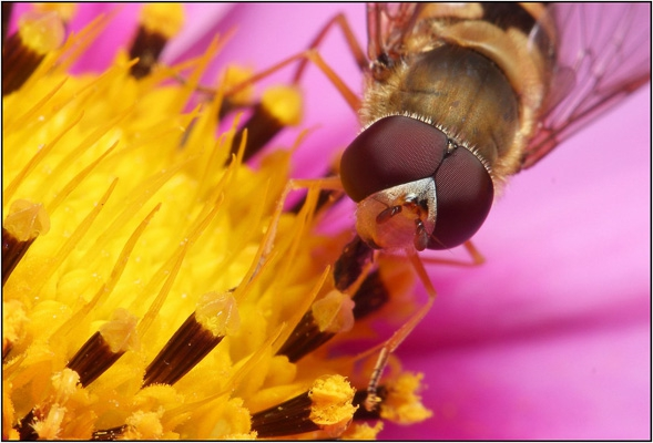 14 - Hover Fly Detail