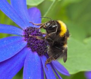 02 - Bizzi Bee-