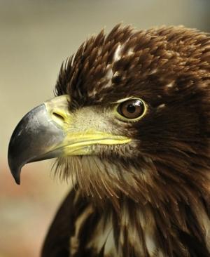 05 - Eagle Eye