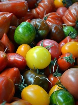 06 - Tomatofest.jpeg