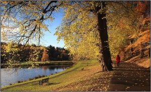 51 - Autumn Stroll