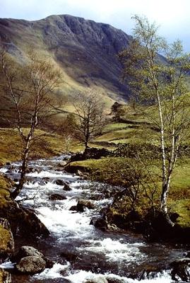 SoY 1971 Pasture Beck (Ian Robertson)