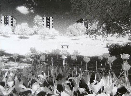 MPoY 1993 Spring Flowers (Tom Bernard)
