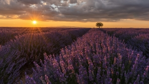 B Section PDI 1stSunset in Provence by Heather Boyd