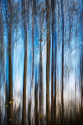 """""""B"""" Colour Prints 3rd Autumn Woods by Martin Ross"""