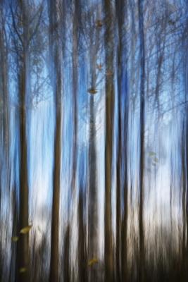 """B"" Colour Print 3rd Autumn Trees by Martin Ross"