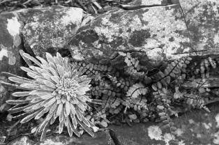 B Section Mono Print 3rd Rock Garden by Sandra Strzyz