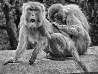 CommendedBeware! Monkey Business by Geoff Longstaff