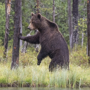 Highly CommendedBrown Bear In The Rain by David Jones
