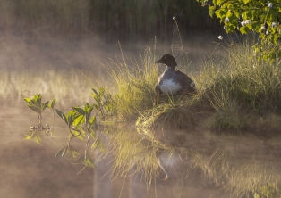 A Section PDI 1stGolden Eye in the Morning by David Jones