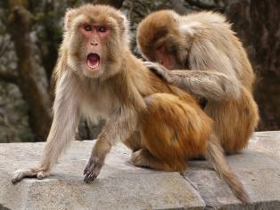 """A PDI 3rd =""""Beware Monkey Business"""" by Geof Longstaff"""