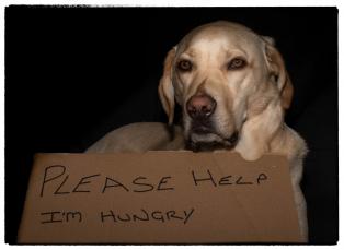 Iain-McKenna-Always-Hungry