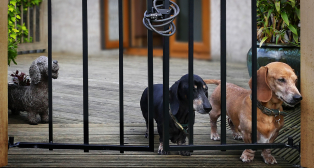 Geof-Longstaff-Don_t-Let-the-Dogs-Out