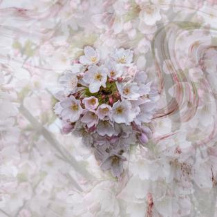 Paul-Morgan-Blossom_