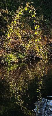 Geof-Longstaff-Green-Arch-and-Reflection
