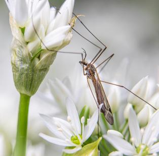 Debra-Crane-Fly
