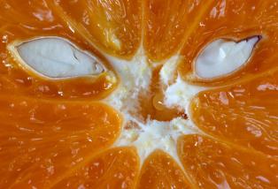 Elaine-Woodford-Orange-Monster-not-that-one