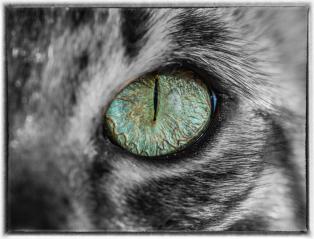 Joan-Cat_s-Eye