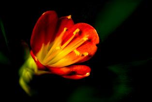may-orange-flower